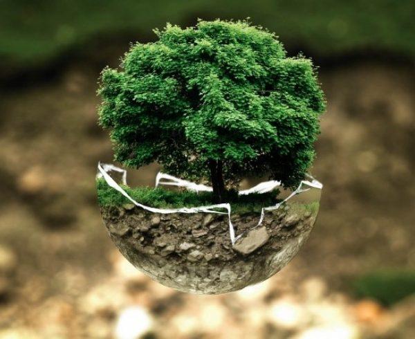 occ-marca-eco-friendly-empresa-sostenible